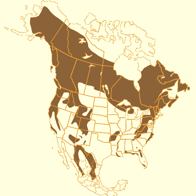 FileAmerican Black Bear Rangejpg  Wikimedia Commons