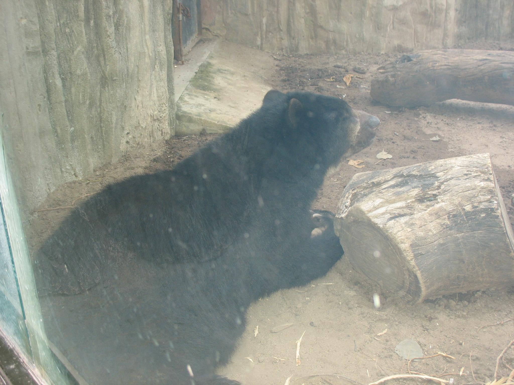 videos hombres osos velludos desnudos