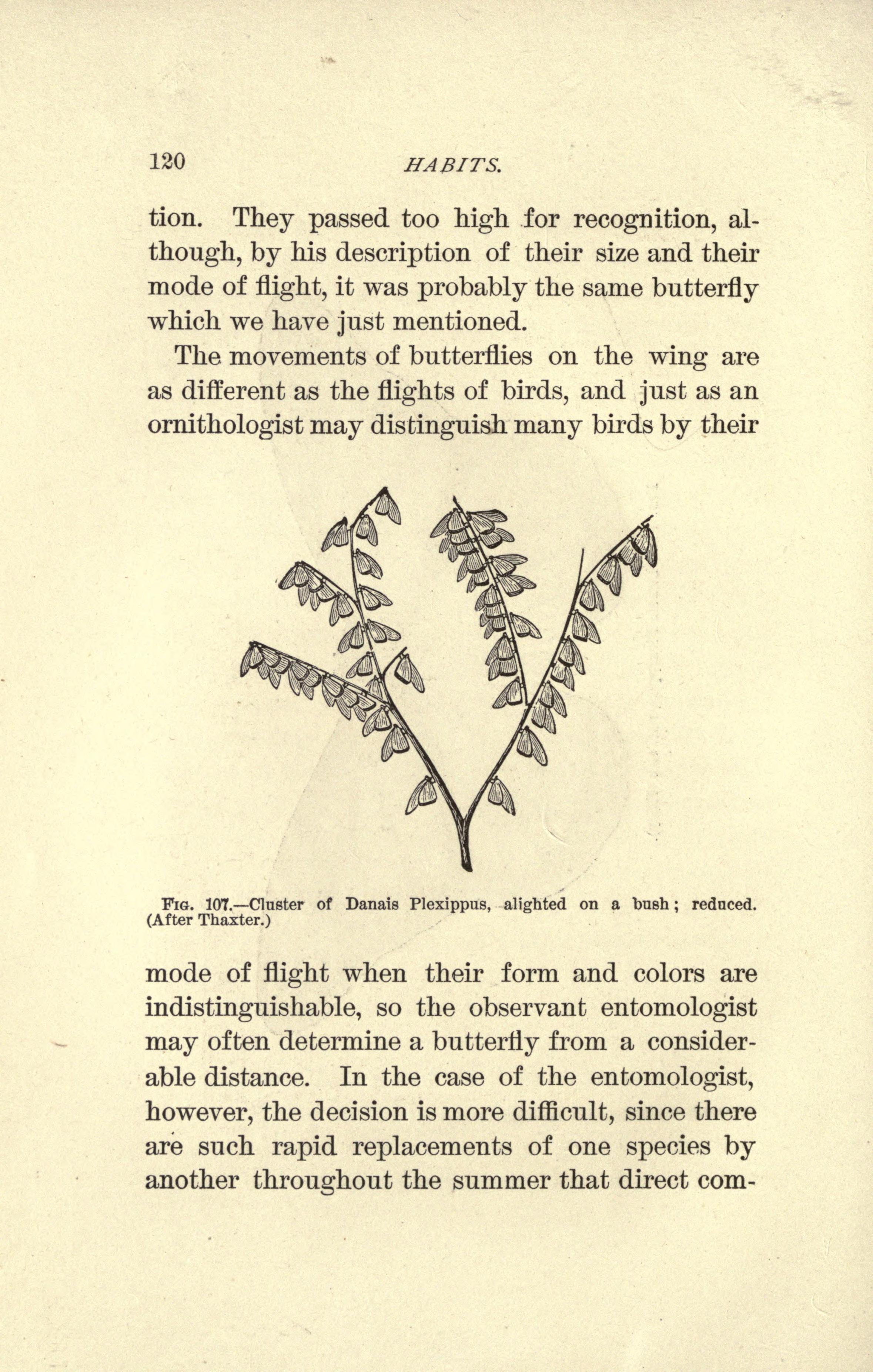 File:erflies (Page 120) BHL19200255.jpg - Wikimedia Commons