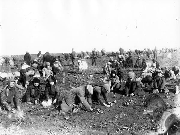 Children_are_digging_up_frozen_potatoes_in_the_field_of_a_collective_farm._Udachne_village,_Donec%E2%80%99k_oblast._1933.jpg