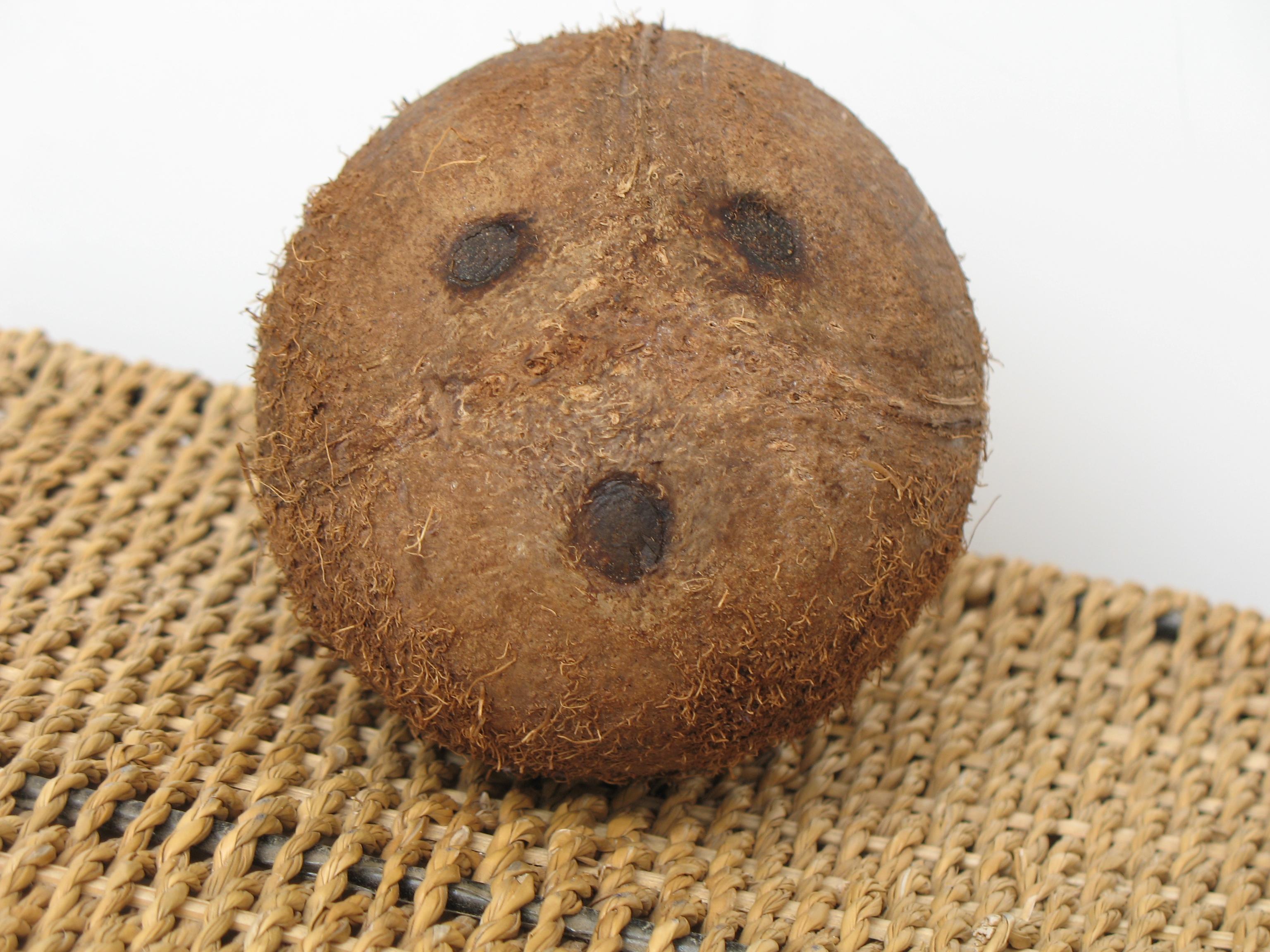 File:Coconut face (2201055109).jpg - Wikimedia Commons