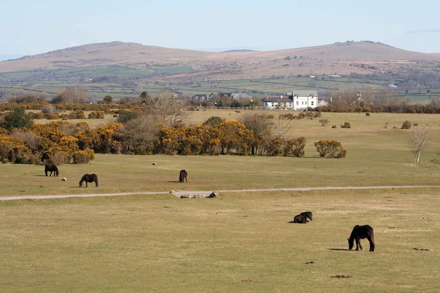 Dartmoor Ponies at Roborough downs - geograph.org.uk - 759509