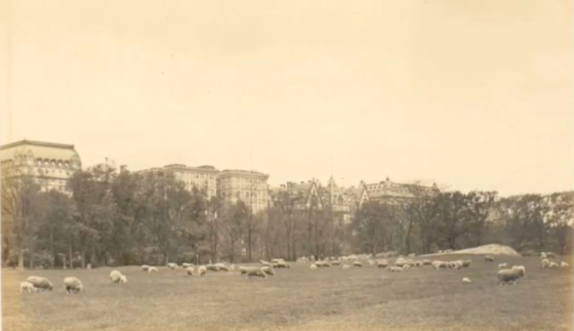 https://upload.wikimedia.org/wikipedia/commons/7/72/Detail_Thaddeus_Wilkerson_Postcard_Sheep_Fold_Central_Park_NY.jpg