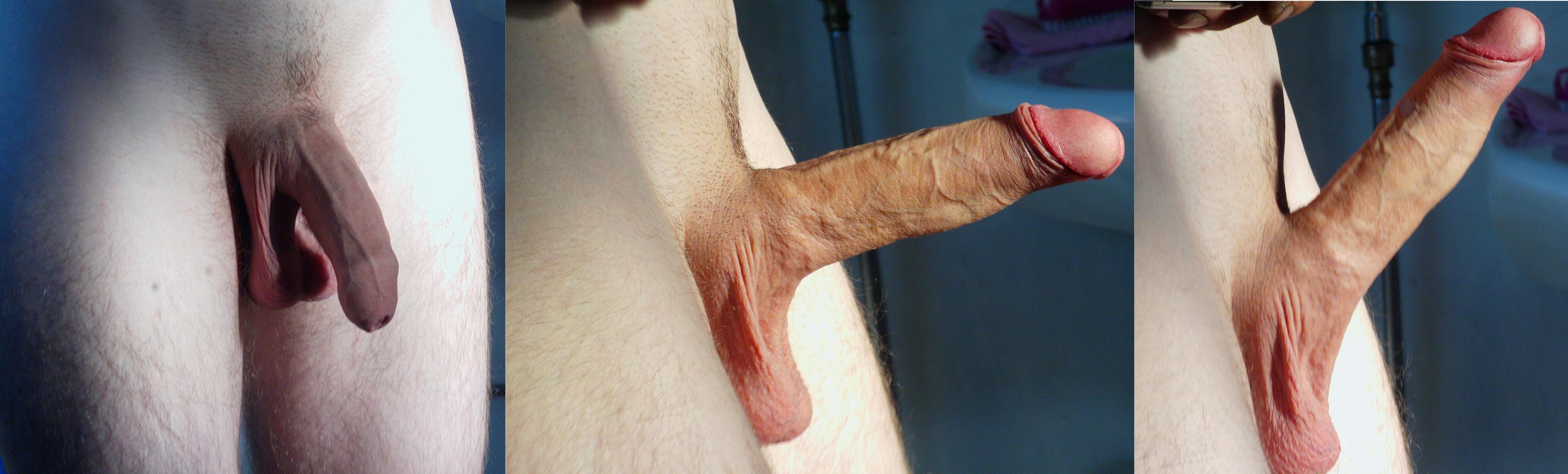 erektion penis bild