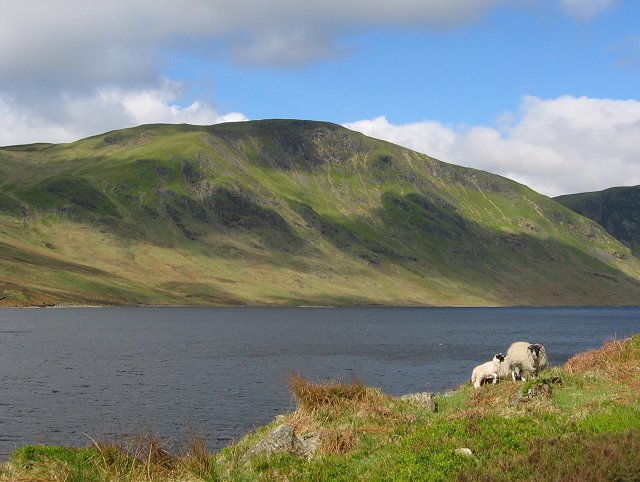 Ewe and lamb, Loch Turret. - geograph.org.uk - 13170