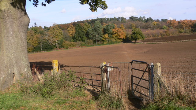 Footpath crossing field to Hydon Heath - geograph.org.uk - 1036839