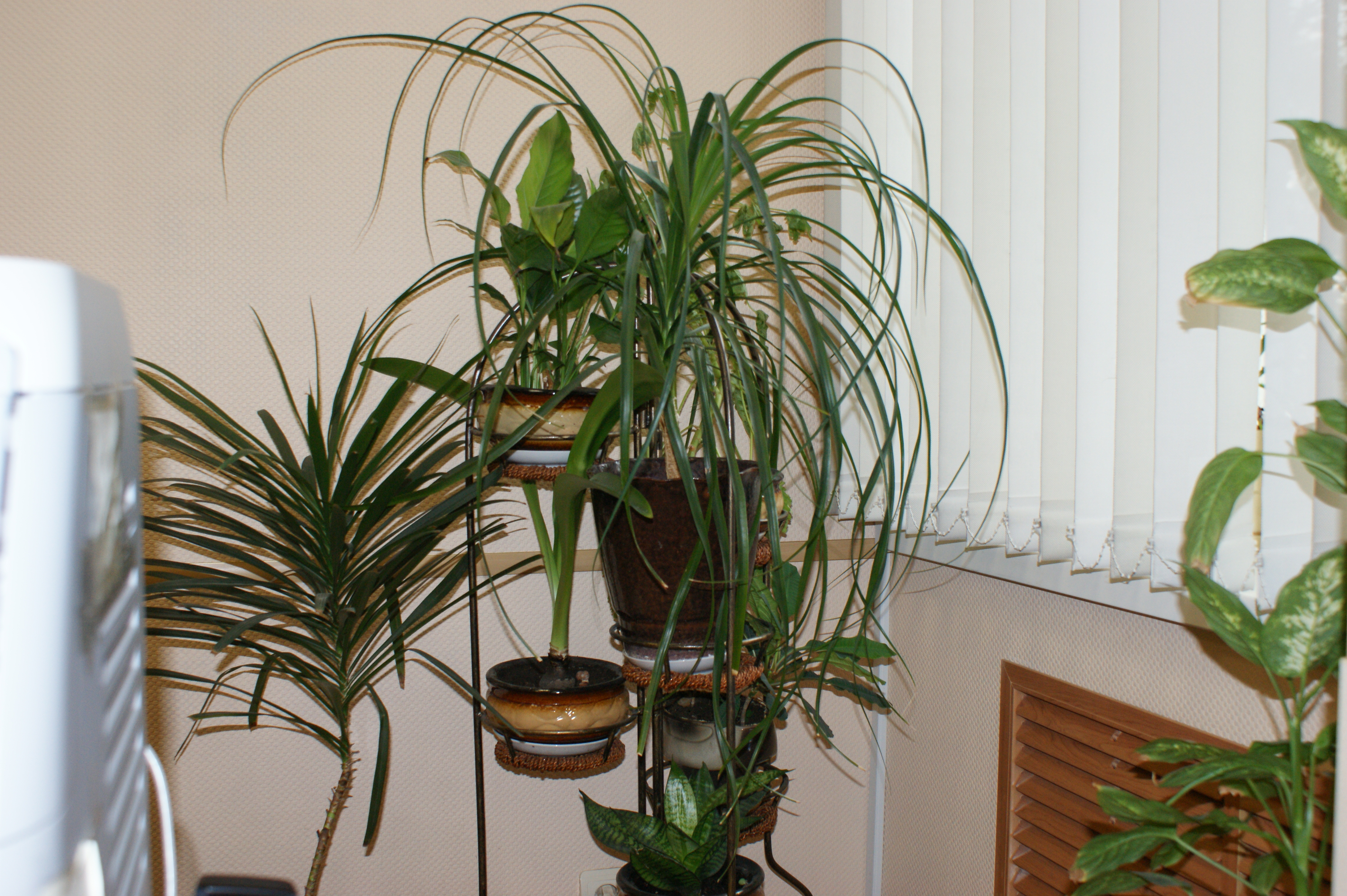 File houseplants jpg wikimedia commons for Large non toxic house plants
