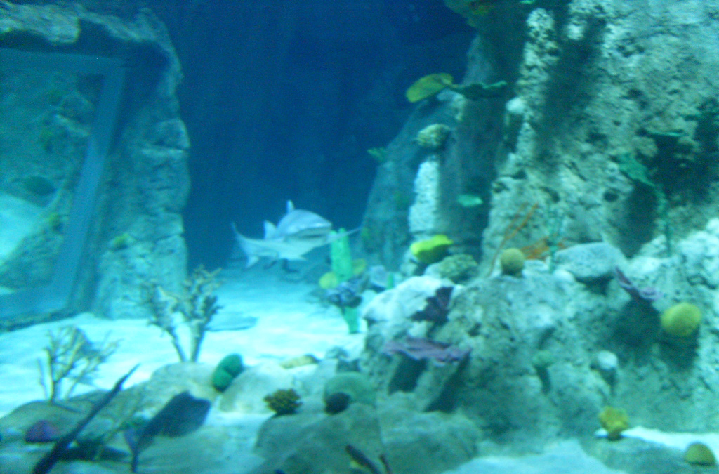 File:Istanbul Aquarium-11.JPG - Wikimedia Commons