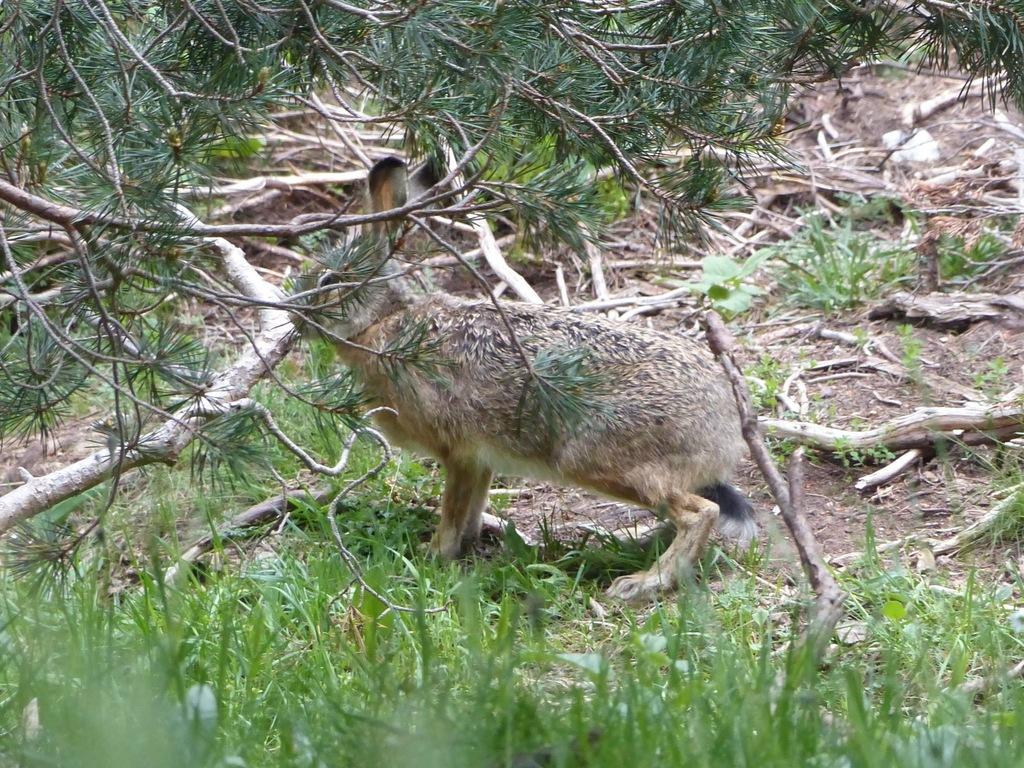 daisysara.ro - Site-ul de stiri al TVR - Habitat sălbatic