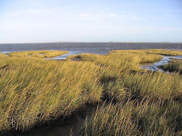 File:Lindisfarne National Nature Reserve - geograph.org.uk ...