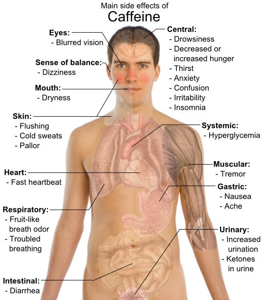 corpul uman canvas