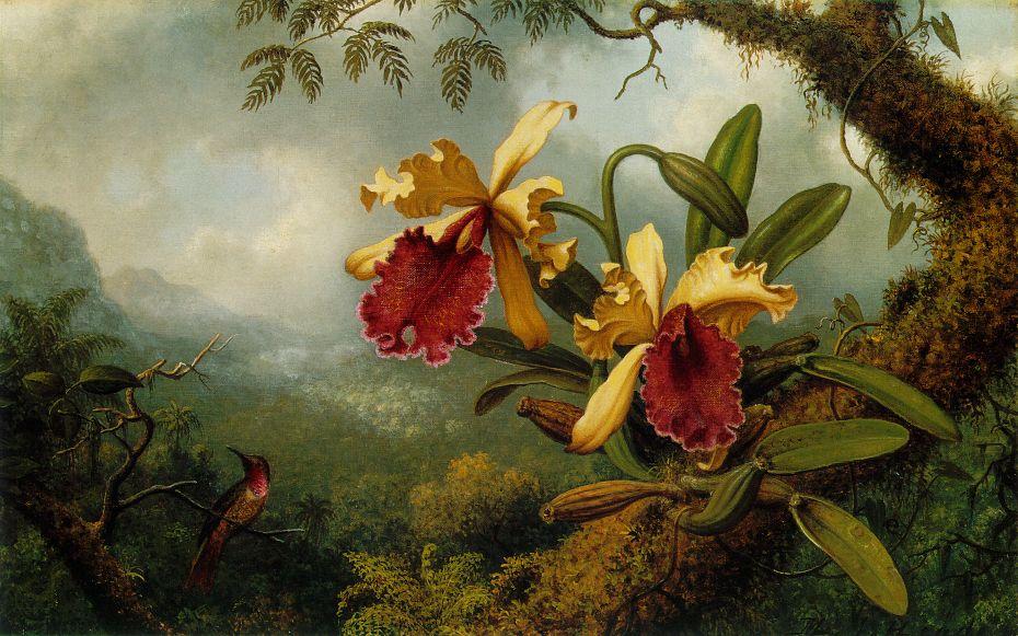 Мартин Джонсон Хид - Орхидеи и колибри ATC.jpg