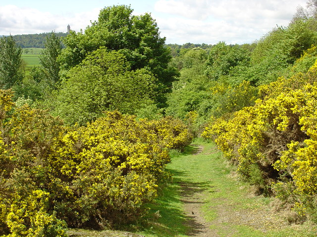 File:Old Drovers Path at Cotkerse.jpg