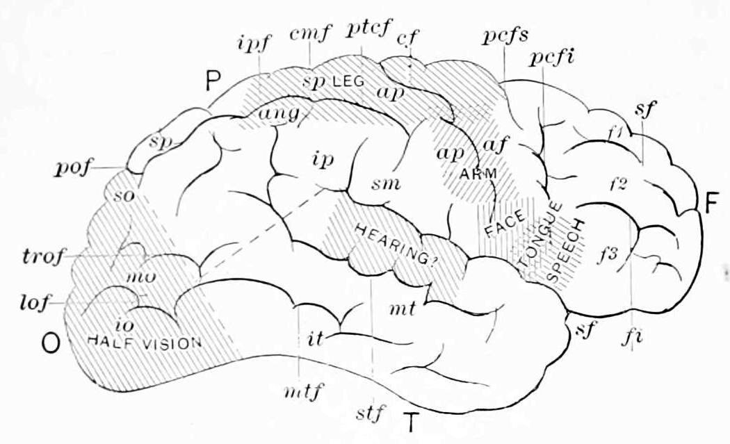 PSM V46 D172 Charts of control of the brain 1.jpg