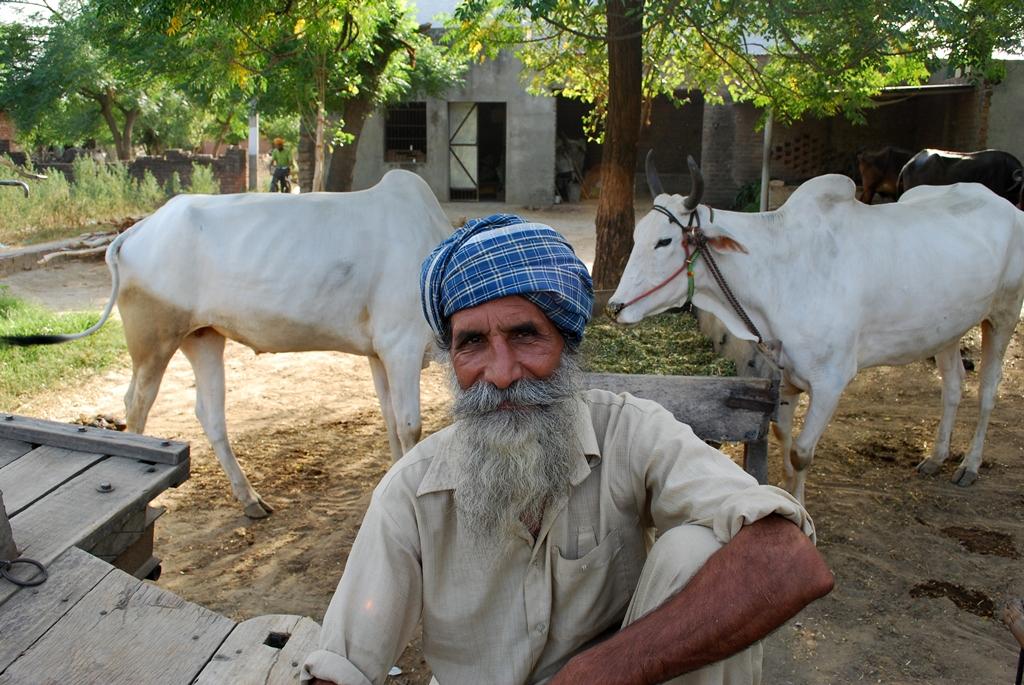Sexy Female Punjab hoshiarpur Escorts