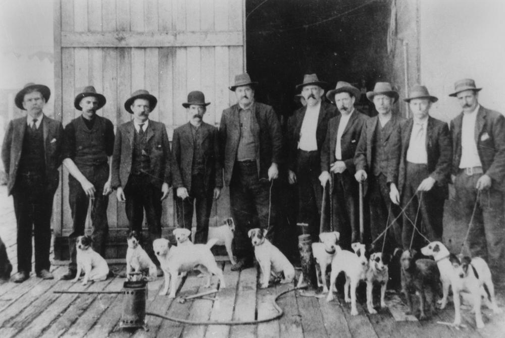 Lost Dogs Australia