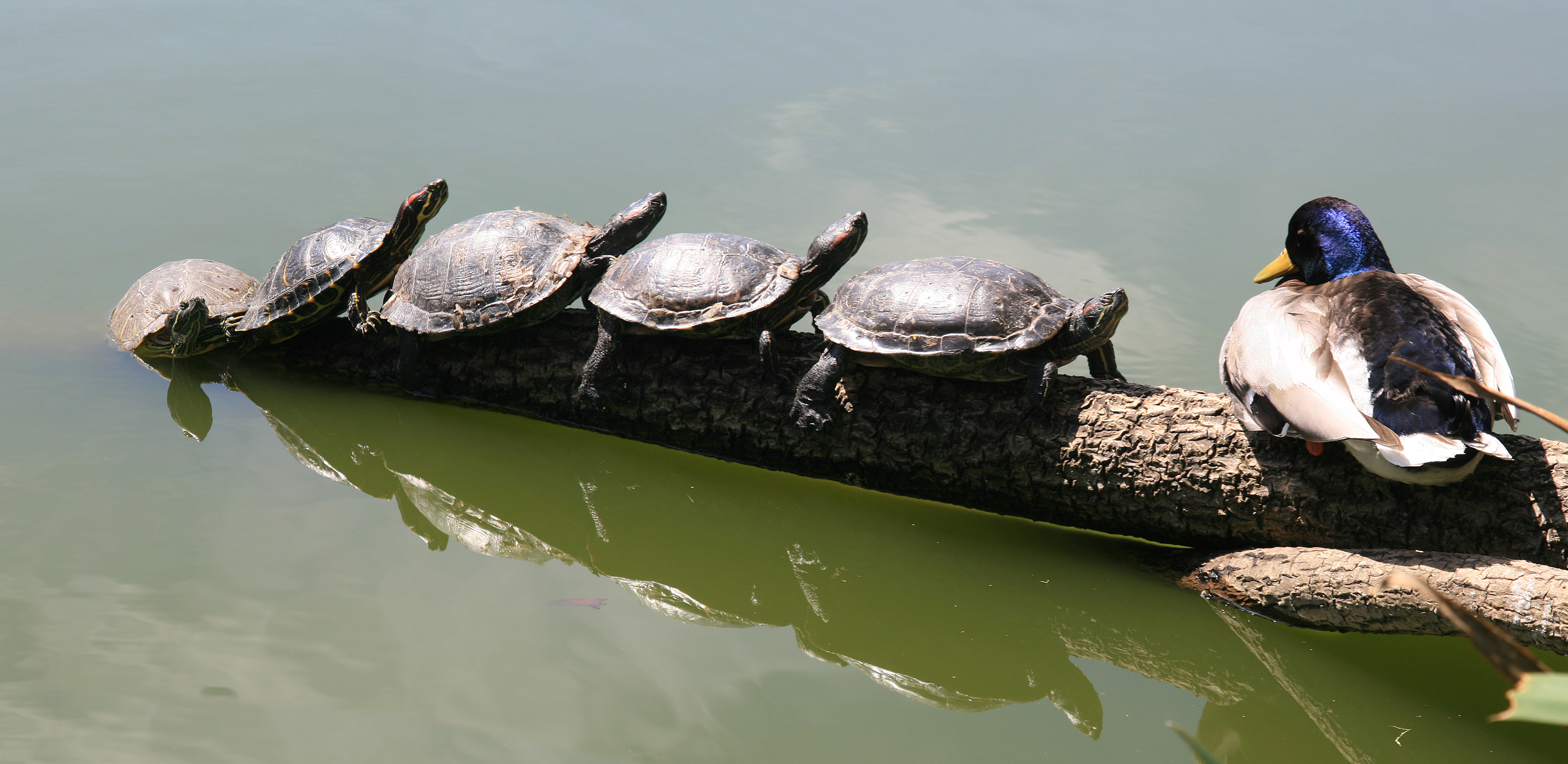 ... slider: You should they be willing to take it to your red eared slider