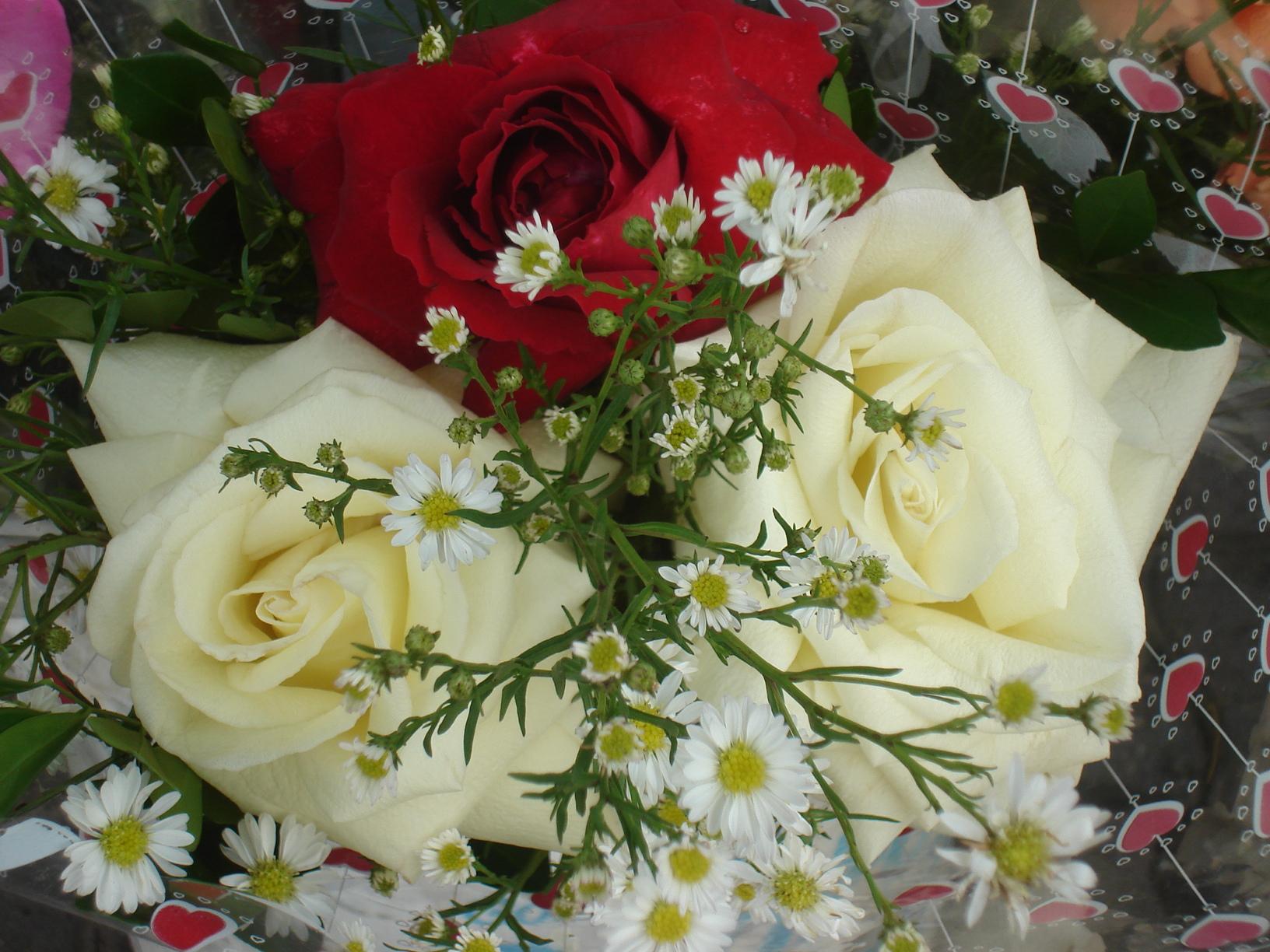 Resultado de imagen para rosas