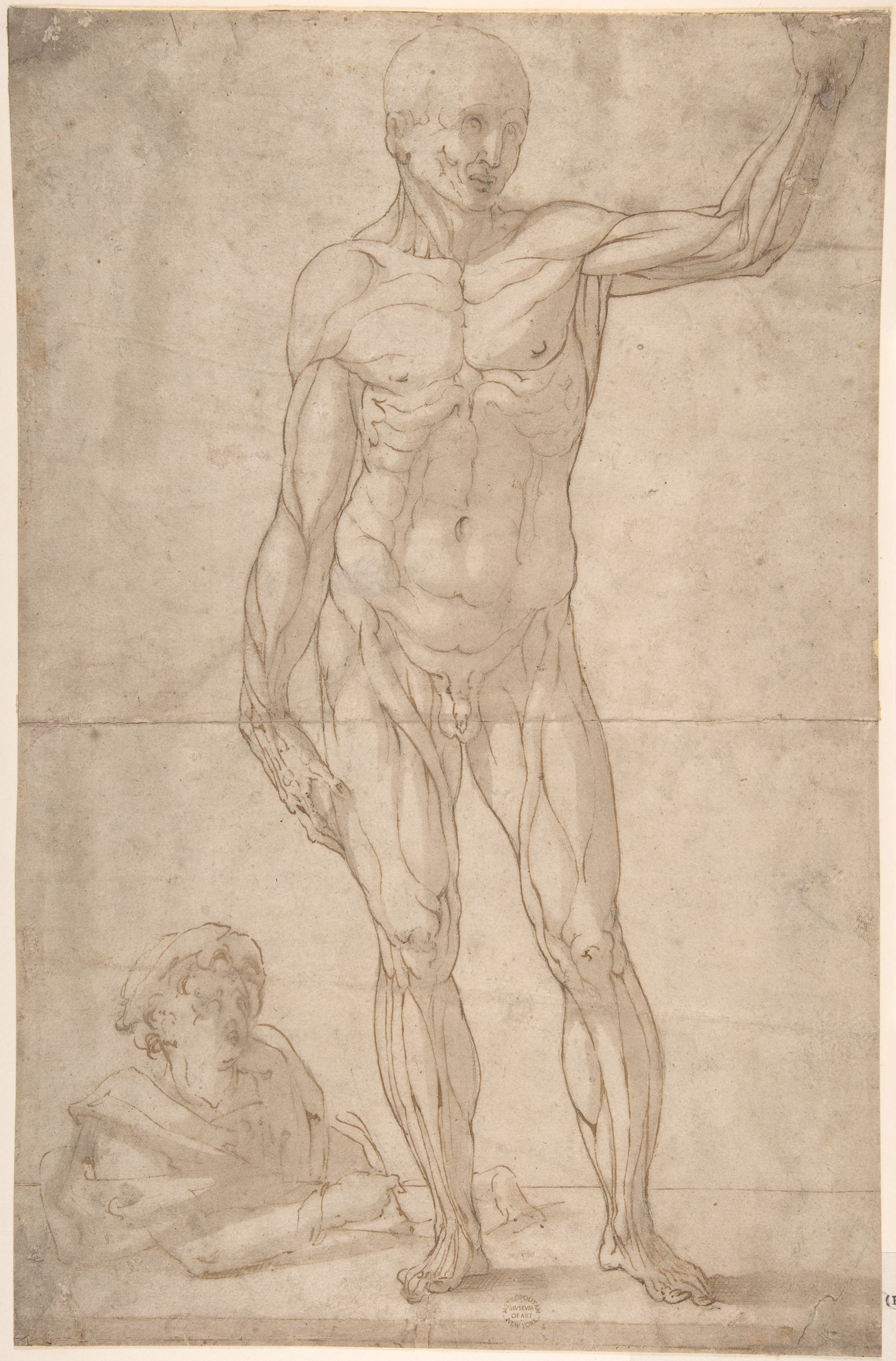 File:Study of Anatomy- A Youth Drawing an Ecorché of a Standing Man ...