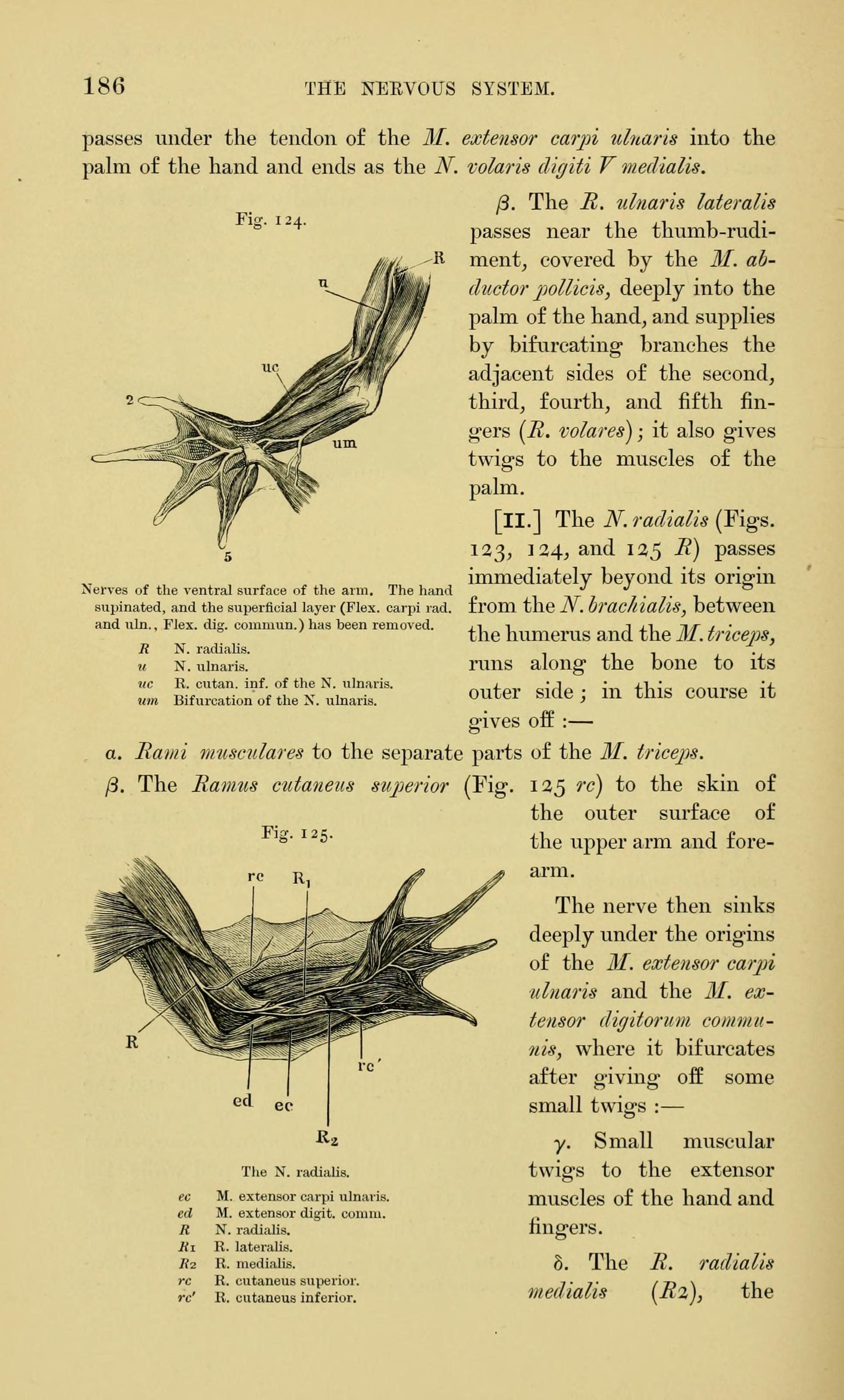 Filethe Anatomy Of The Frog Page 186 Figs 124 125 Bhl7554945