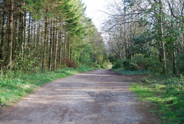Track through the trees near Kingston - geograph.org.uk - 765962