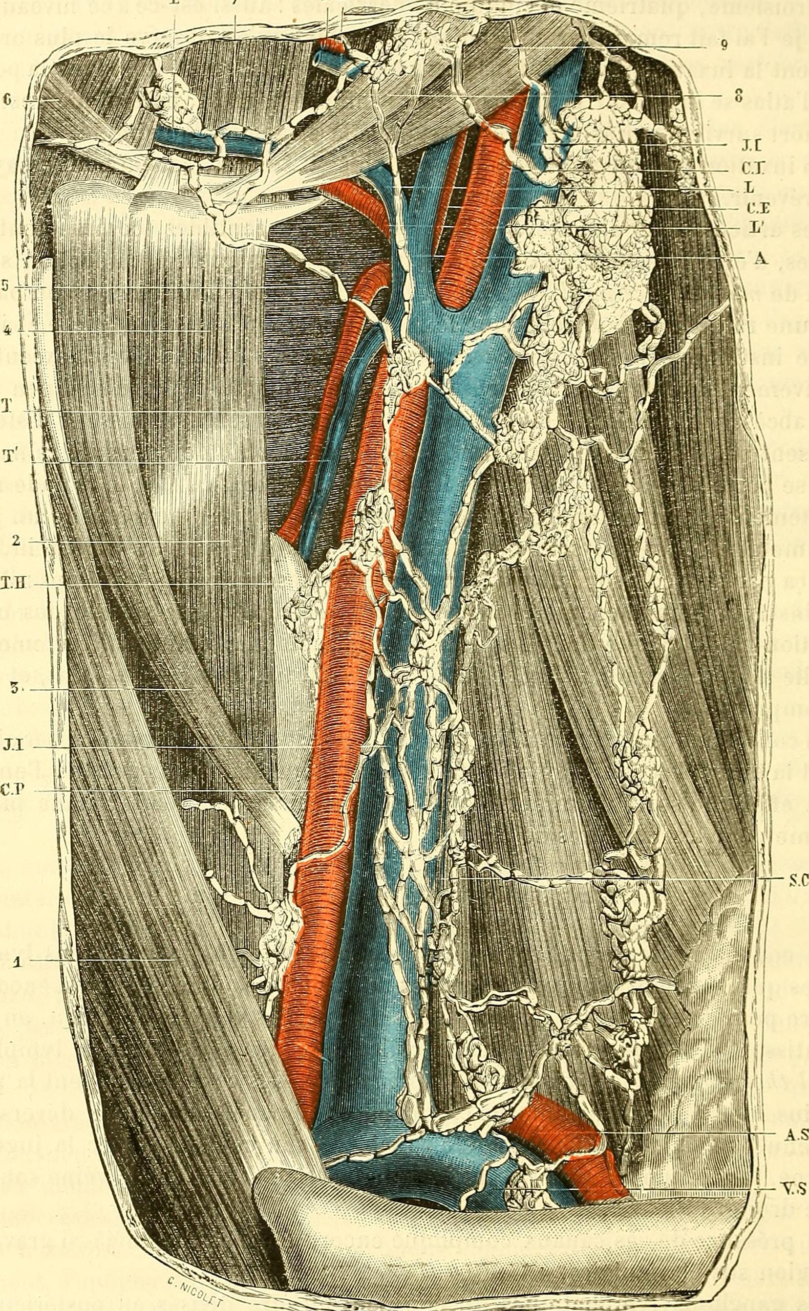 File:Traité d\'anatomie topographique avec applications a la ...
