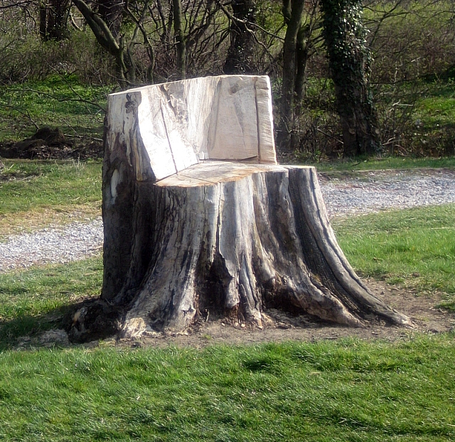 File Tree Stump Hatfeild Hall Golf Course Geograph Org