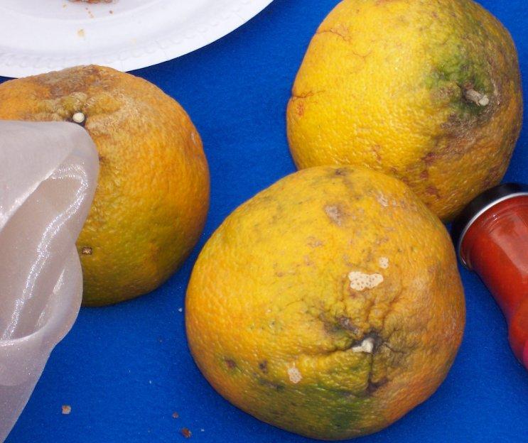 kist sinaasappels bestellen 15 kg