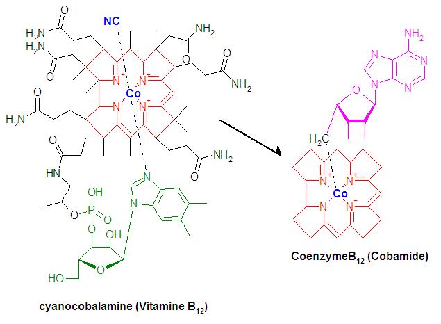 VitamineB12.png