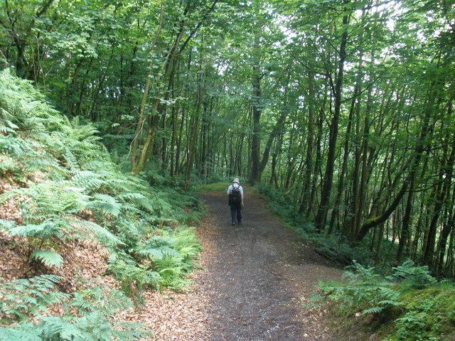 Woodland path, through Castle Neroche - geograph.org.uk - 1374533