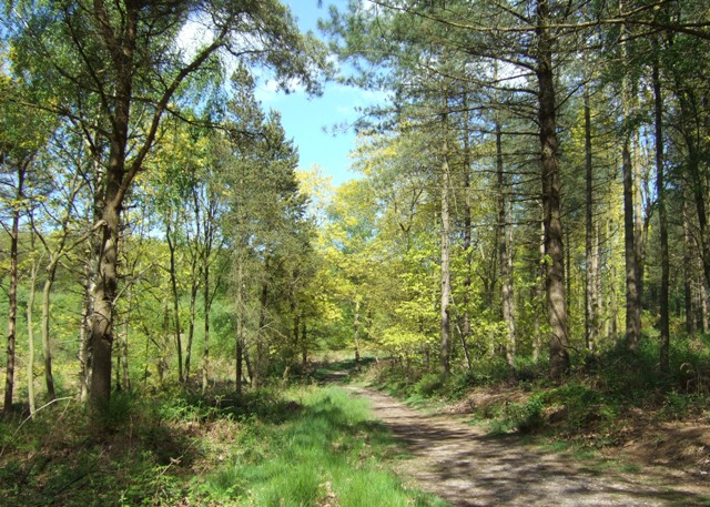 Woodland track in Hanchurch Hills - geograph.org.uk - 1306642