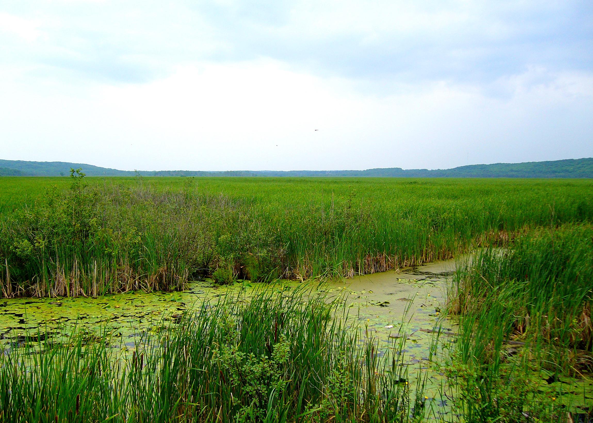 Wye Marsh in Ontario by WilyD