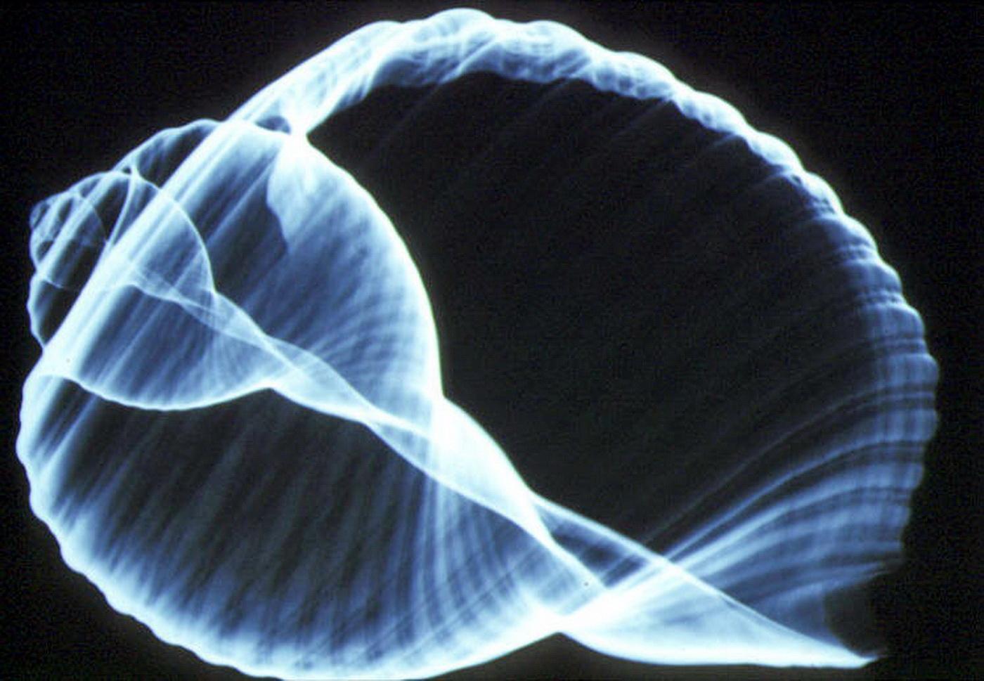 Amanda Françozo Porno user:mattes/favorite files/images/b - wikimedia commons