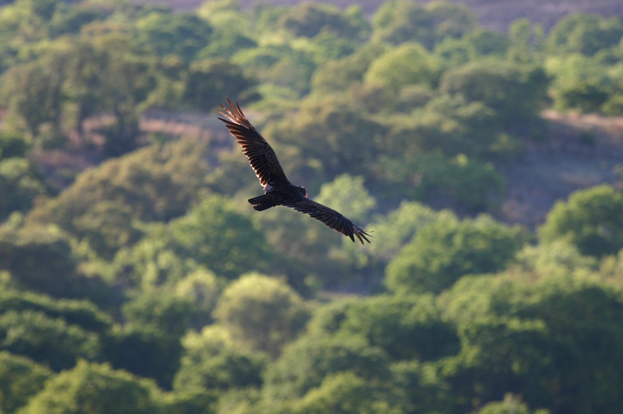 description aerial flying birds -#main