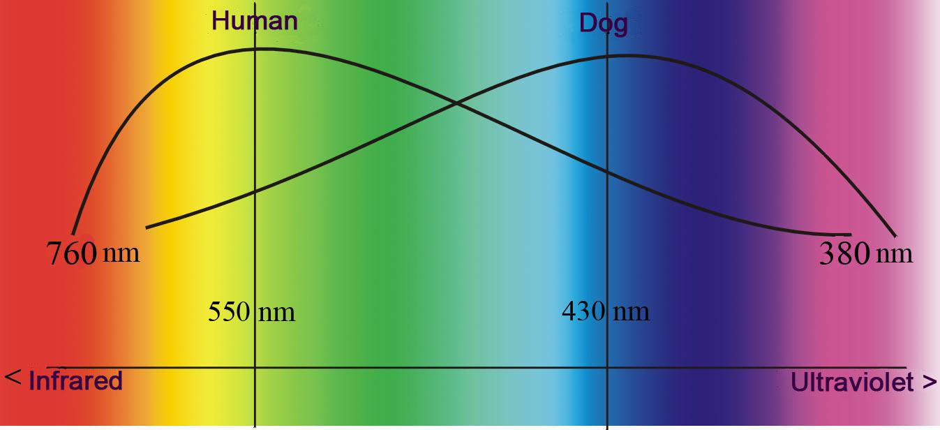 Auge Hund Diagramm engl.jpg