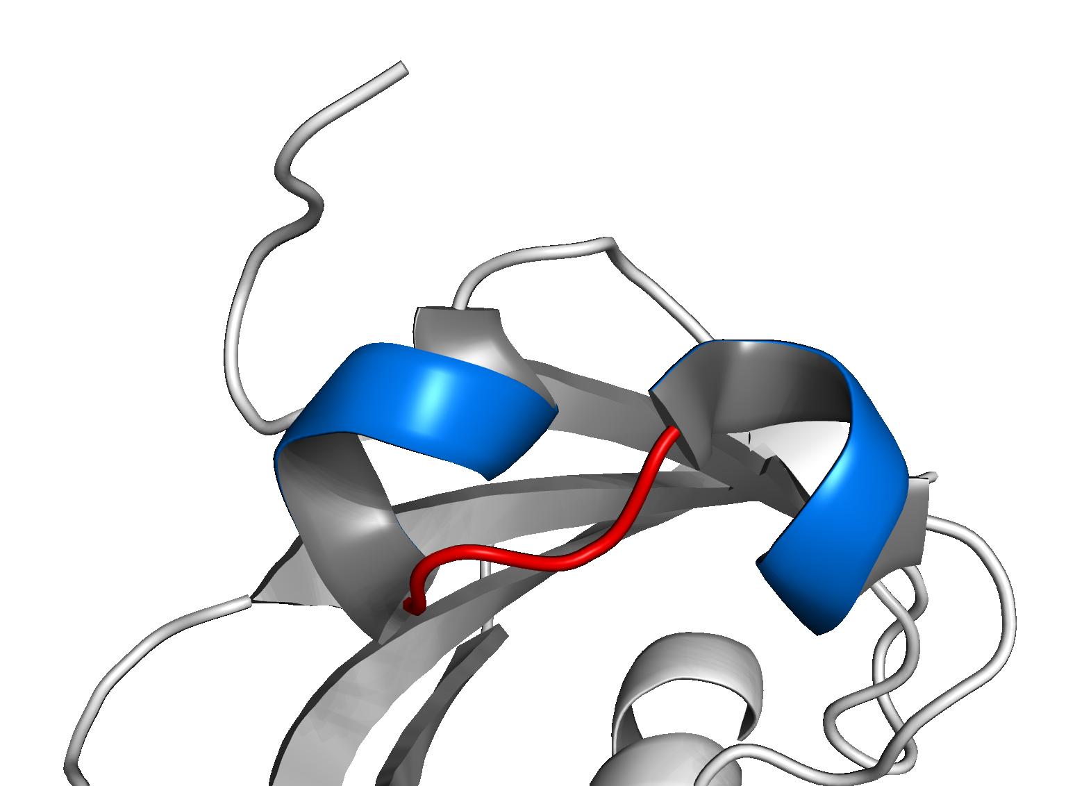 Basic helix-loop-helix - Wikipedia