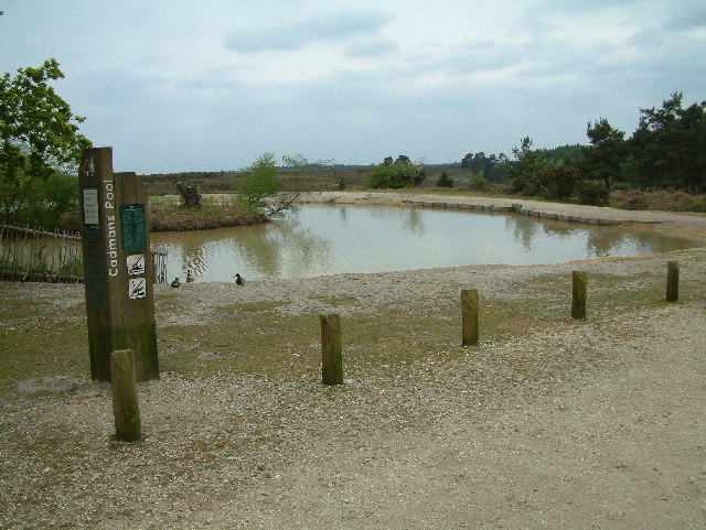 Cadman's Pool, New Forest - geograph.org.uk - 9835