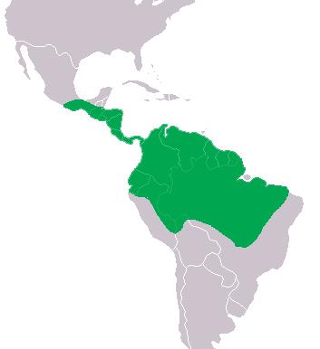 Distribución del caimán de anteojos