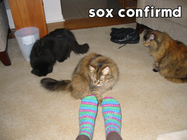 Cat findz sox.jpg