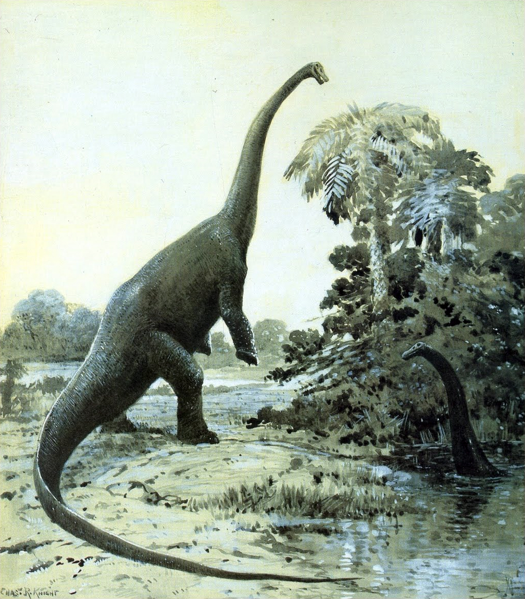 File:Diplodocus cknight.jpg