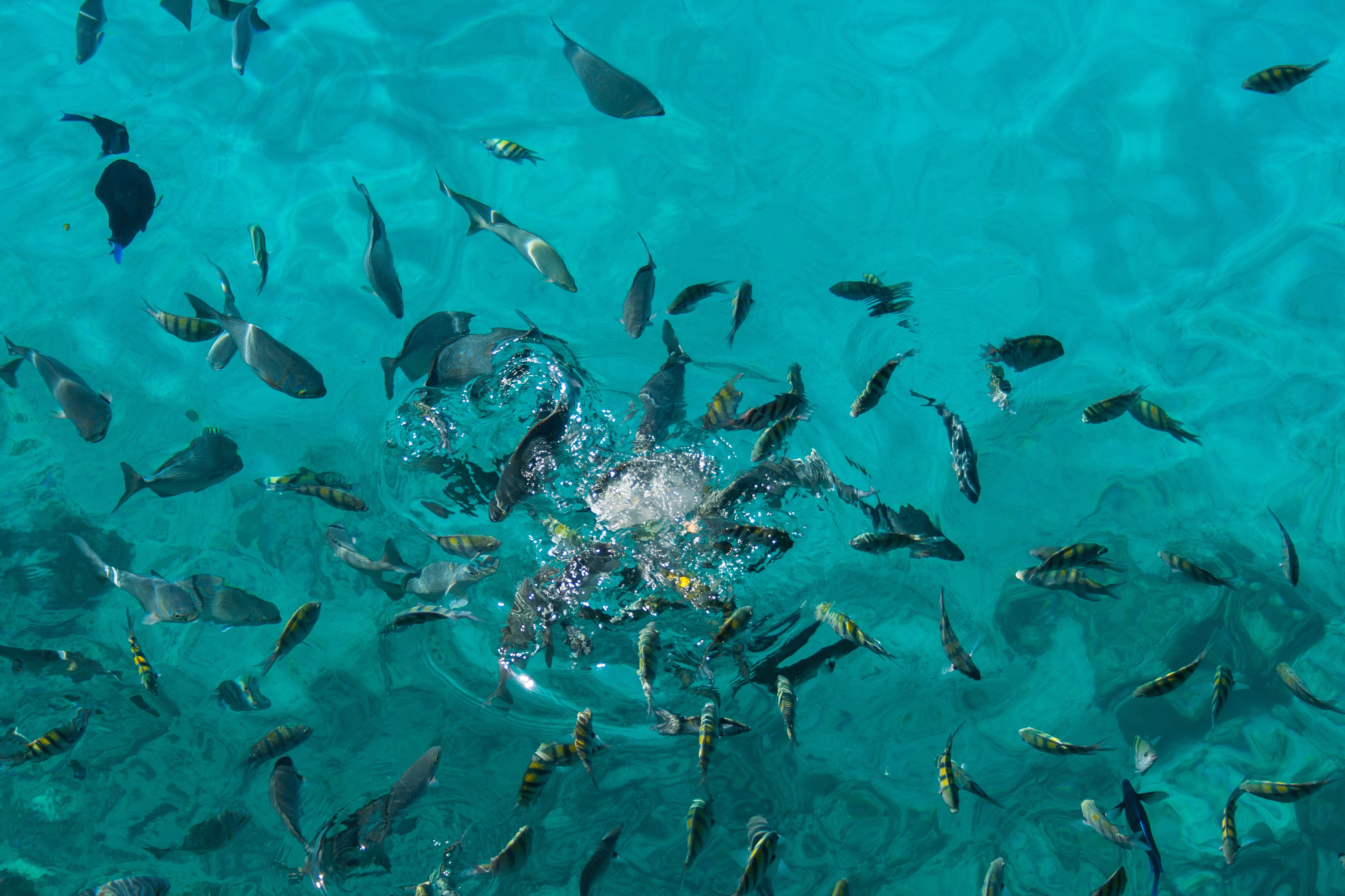 File fishes at west view 8333599404 jpg wikimedia commons for What are the seven fishes