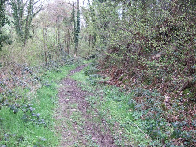 Footpath in the woods at Eggesford - geograph.org.uk - 162525