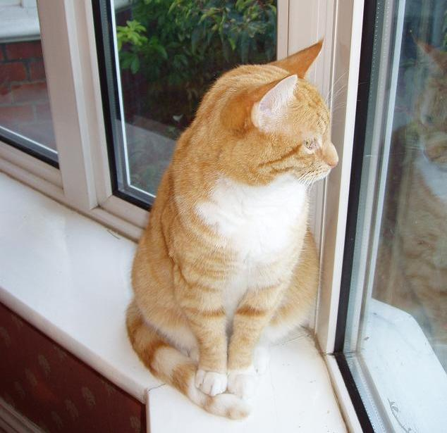Cat Will Not Eat On Orbax Medicine