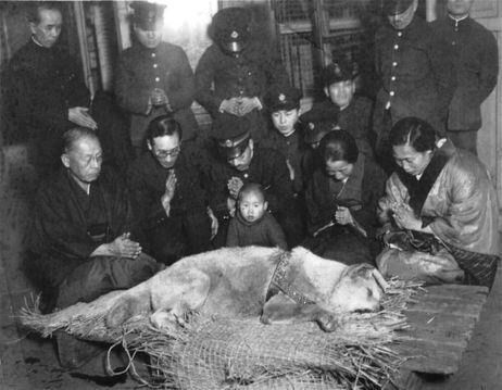 Hachiko funeral