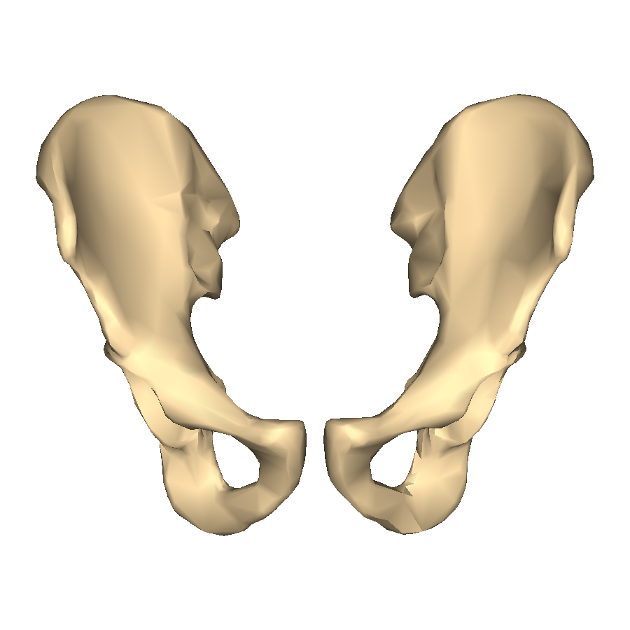 File:Hip bone - close-up - anterior view.png - Wikimedia Commons