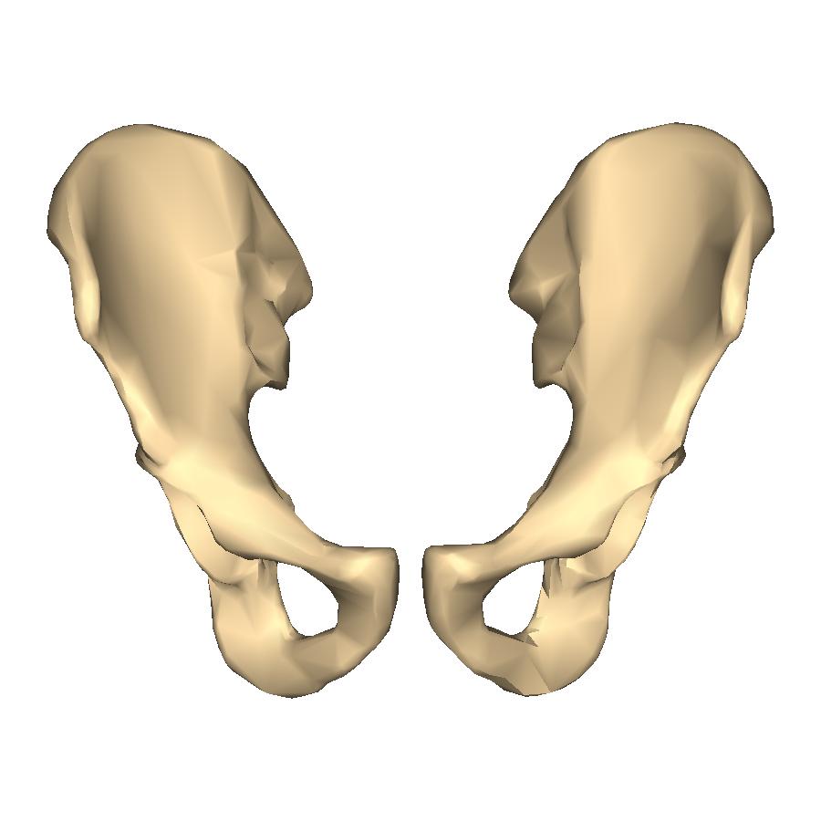 [Image: Hip_bone_-_close-up_-_anterior_view.png]