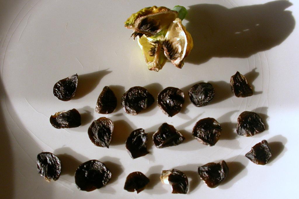 Гиппеаструм выращивание из семян домашних условиях 41