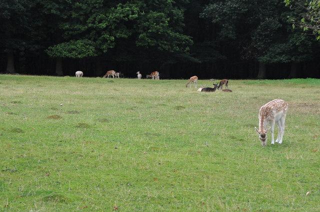 File:Rheingau-Taunus-Kreis - Deer Grazing - geo.hlipp.de - 27305.jpg