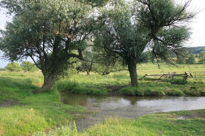 Zdynia (rzeka)