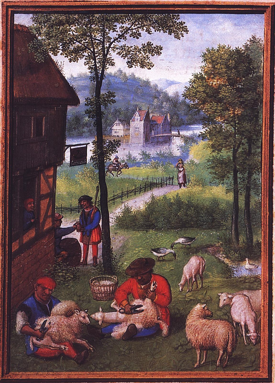 Schafschur: Der Juni in einem Stundenbuch von Simon Fleming, 1. Hälfte des 16. Jahrhunderts. München, StB, cod. lat. 23638, fol. 7v.